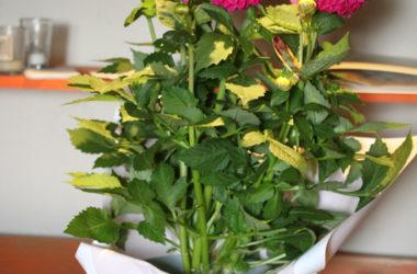plant_7439